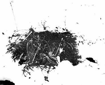 Перевала Дятлова. Смерть, идущая по следу... Версия Ракитина. Часть 1